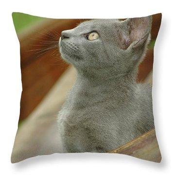 Little Gray Kitty Cat Throw Pillow