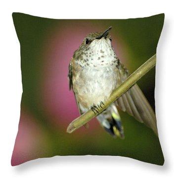 Little Humming Bird Throw Pillow