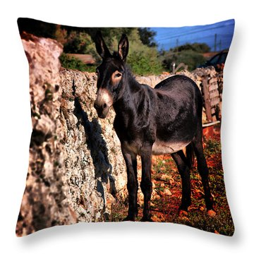 Little Mediterranean Donkey Dream Color With White Eyes And Belly  Hdr By Pedro Cardona Throw Pillow by Pedro Cardona Llambias