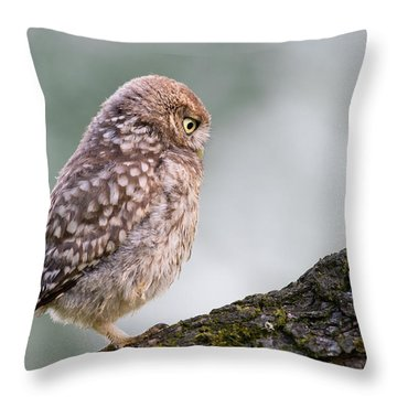 Little Owl Chick Practising Hunting Skills Throw Pillow by Roeselien Raimond