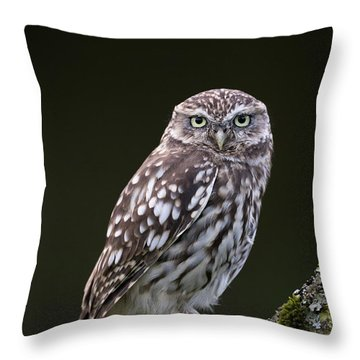 Little Owl Throw Pillow