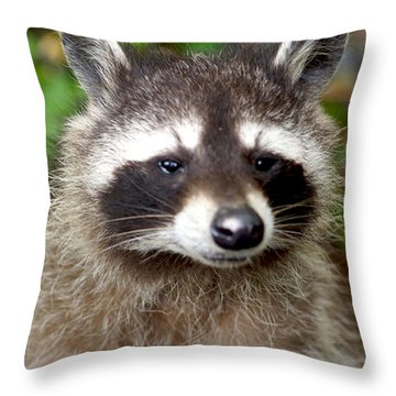 Little Racoon - Procyon Lotor Throw Pillow