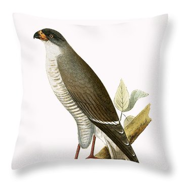 Little Red Billed Hawk Throw Pillow