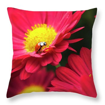 Little Red Ladybug Throw Pillow by Christina Rollo