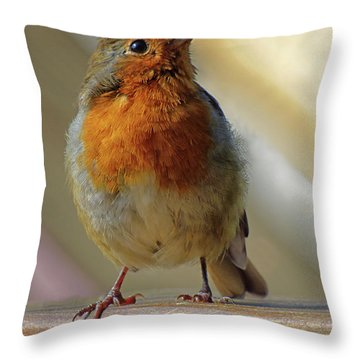 Little Robin Redbreast Throw Pillow