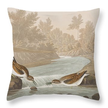 Little Sandpiper Throw Pillow by John James Audubon