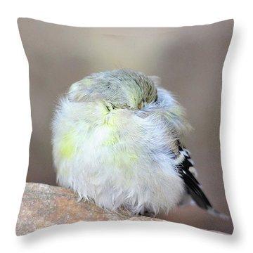 Little Sleeping Goldfinch Throw Pillow