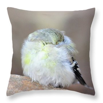 Little Sleeping Goldfinch Throw Pillow