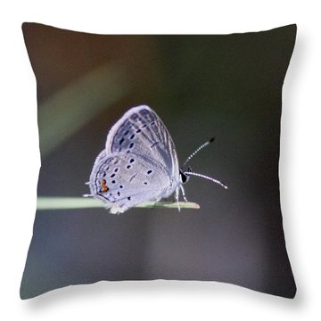 Little Teeny - Butterfly Throw Pillow