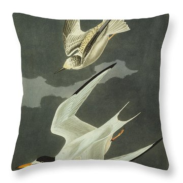 Little Tern Throw Pillow by John James Audubon