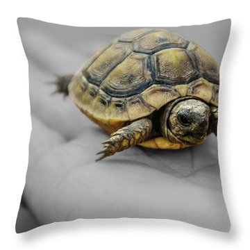 Little Turtle Baby Throw Pillow