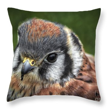 Little Wing Throw Pillow by Mitch Shindelbower