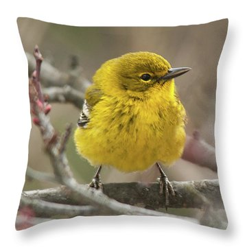 Little Yellow Throw Pillow by Lara Ellis