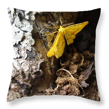 Little Yellow Moth Throw Pillow by Peggy King