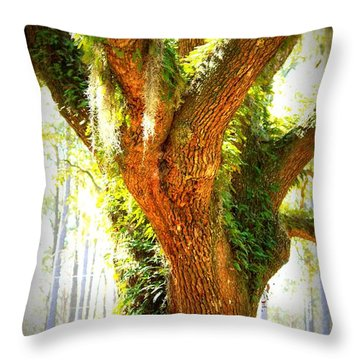 Live Oak With Cypress Beyond Throw Pillow by Carol Groenen