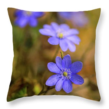Throw Pillow featuring the photograph Liverworts In The Afternoon Sunlight by Jaroslaw Blaminsky