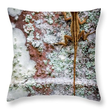 Lizard And Lichen On Brick Throw Pillow