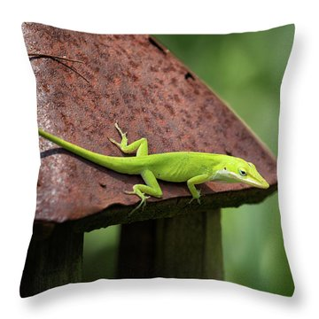 Lizard On Lantern Throw Pillow by Stephanie Hayes
