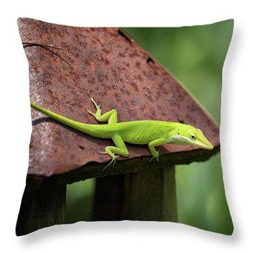 Lizard On Lantern Throw Pillow