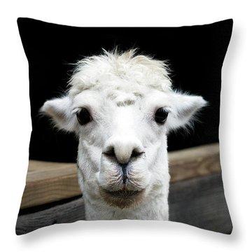 Llama Throw Pillow by Lauren Mancke