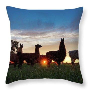 Llamas At Sunset Throw Pillow