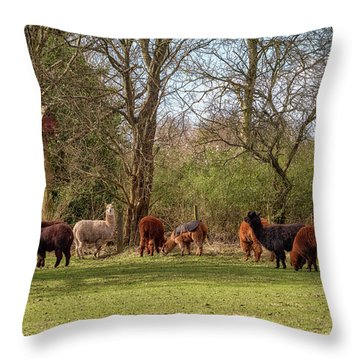 Throw Pillow featuring the photograph Alpacas In Scotland by Jeremy Lavender Photography