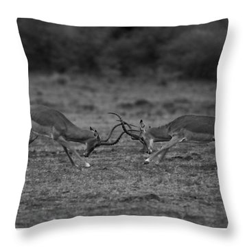 Locked Horns Throw Pillow by Ramabhadran Thirupattur