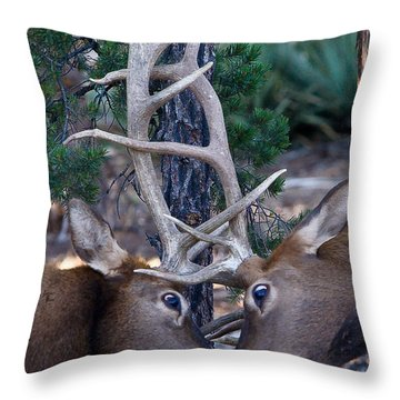 Locking Horns - Well Antlers Throw Pillow