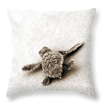 Turtle Home Decor