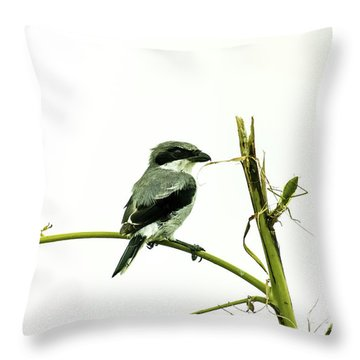 Throw Pillow featuring the photograph Loggerhead Shrike And Mantis by Robert Frederick