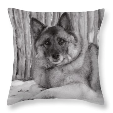 Loki By Fence Throw Pillow
