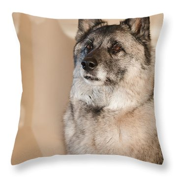 Loki Sepia Throw Pillow