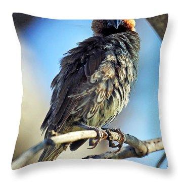 Lonchurea Throw Pillow