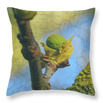 Throw Pillow featuring the photograph London Plane Buds D - Platanaceae Fine Art by Jacek Wojnarowski