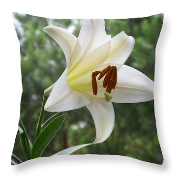 Throw Pillow featuring the photograph Lone Beauty by Jake Hartz