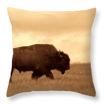 Lone Bison  Throw Pillow by American West Legend By Olivier Le Queinec