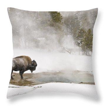 Bison Keeping Warm Throw Pillow