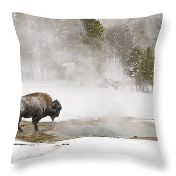 Throw Pillow featuring the photograph Bison Keeping Warm by Gary Lengyel