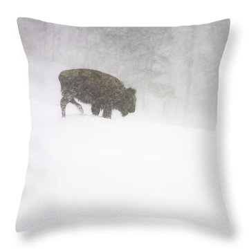 Lone Buffalo Bull In Winter Storm Throw Pillow