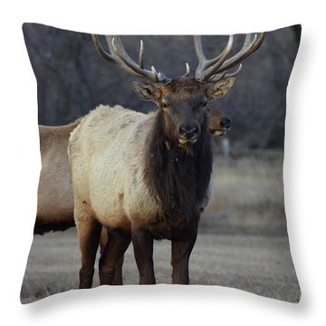 Throw Pillow featuring the photograph Lone Bull by Billie Colson