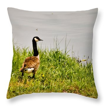 Lone Canada Goose - Loch Mary - Earlington Kentucky Throw Pillow by Greg Jackson