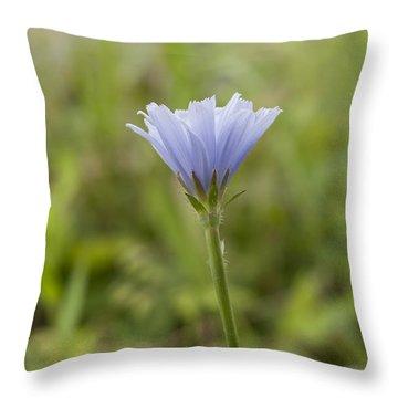 Lone Chicory Blossom Throw Pillow