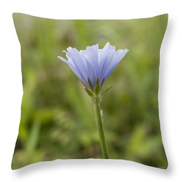 Lone Chicory Blossom Throw Pillow