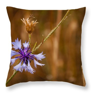 Lone Cornflower Throw Pillow