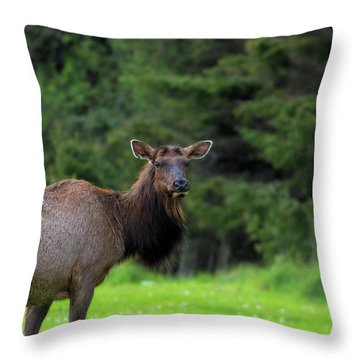 Lone Elk At Ecola State Park Throw Pillow