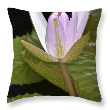 Lone Pink Waterlily Throw Pillow
