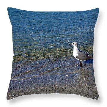 Lone Seagull At Miramar Beach In Naples Throw Pillow