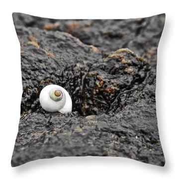 Lone Seashell Throw Pillow