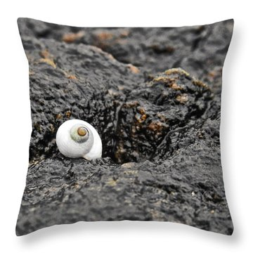 Lone Seashell Throw Pillow