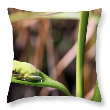 Lone Tree Frog Throw Pillow